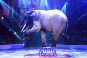 elephant-583427